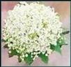Maiglöckchen Brautstrauß