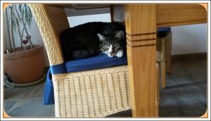 Schlafplatz am Esstisch