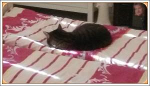 Unser Bett!?