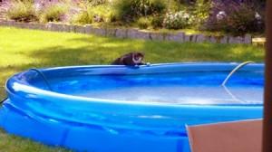 Charlotte prüft den Pool