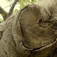 Herzinfarkt: Gefahr eines Re-Infarkt
