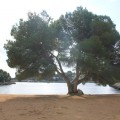 Mallorca Blau PuraVida Strand